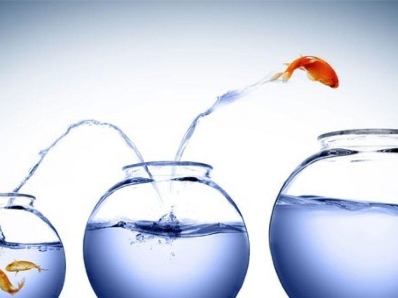 Cambiare lavoro e fare carriera - pesci e bocce